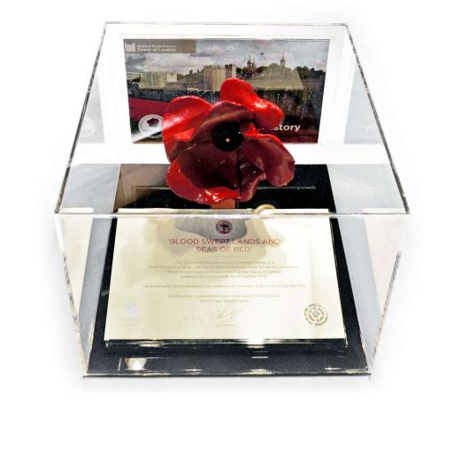 Poppy Display Case